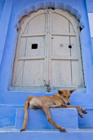 20090221_jodhpur_008.jpg